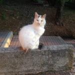 Una gattina dolce dolce