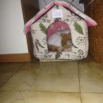 la casetta del mio gattino