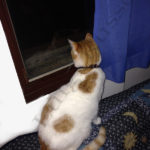 gattino che guarda dalla finestra