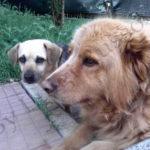 I miei due cani