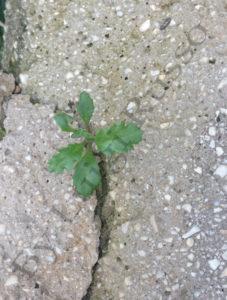 Piantina nata sul cemento