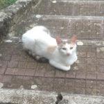 Neve: gattina dolcissima