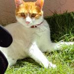 cuccia con erba gatta